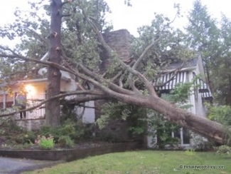 Storm tree damage in Evansville
