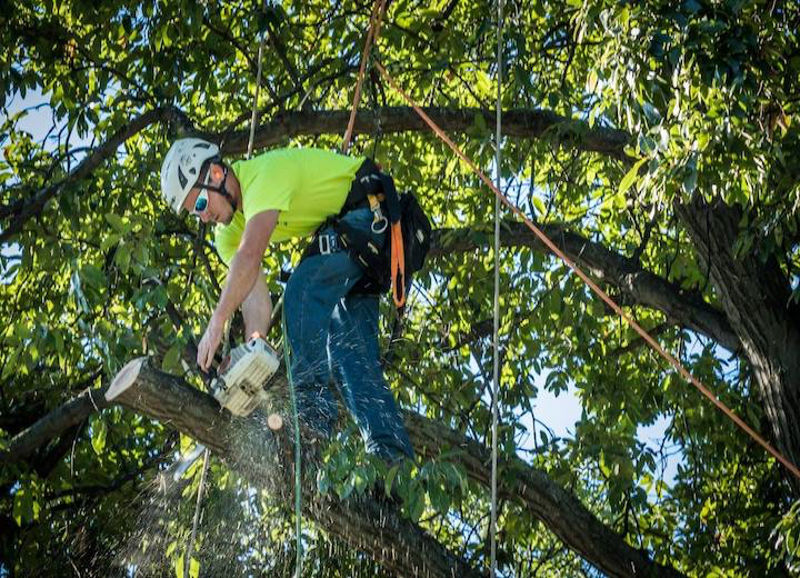 Tree Care Work, Evansville IN