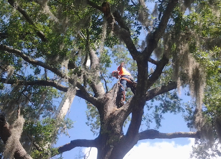 Tree Service Work, Evansville IN